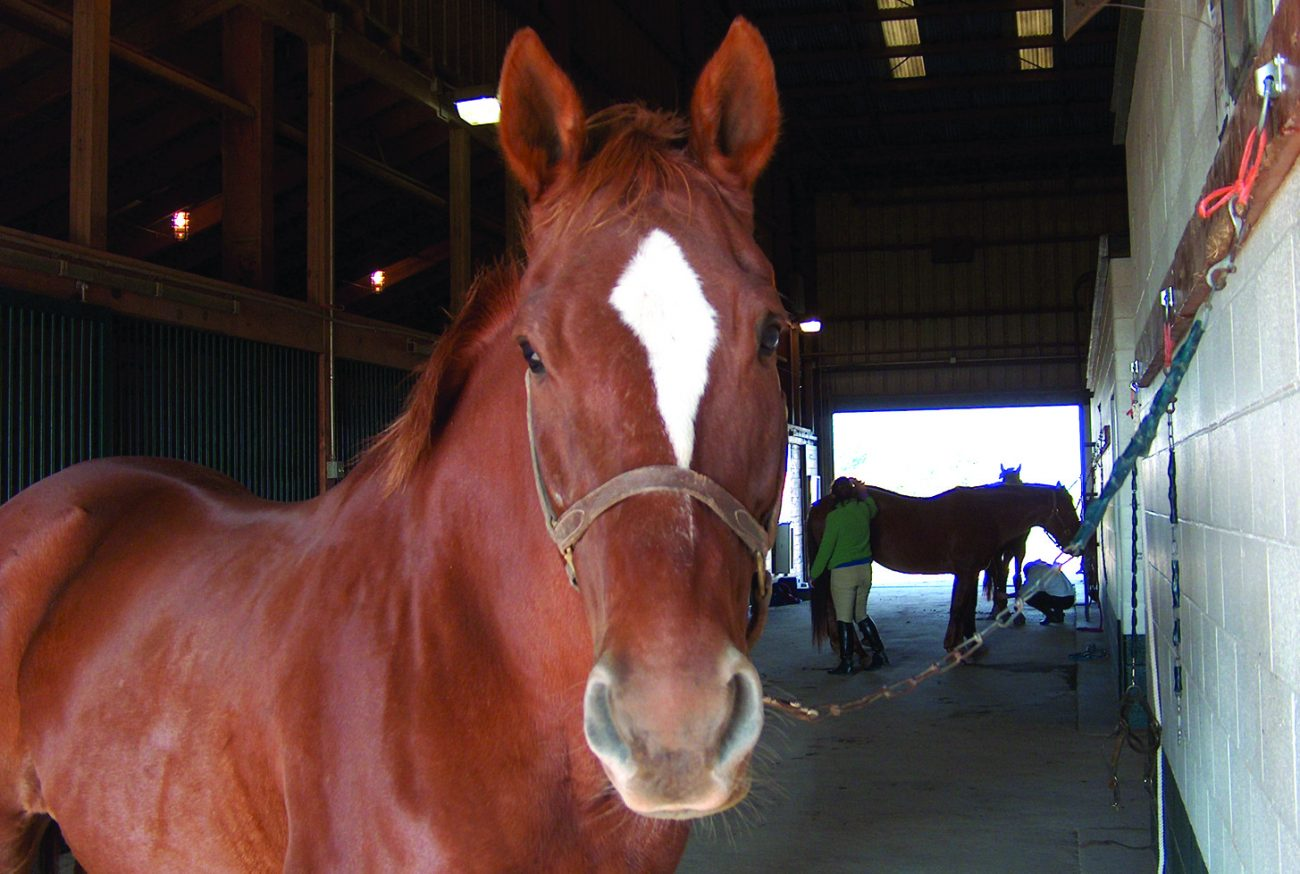 horse in barn midway university