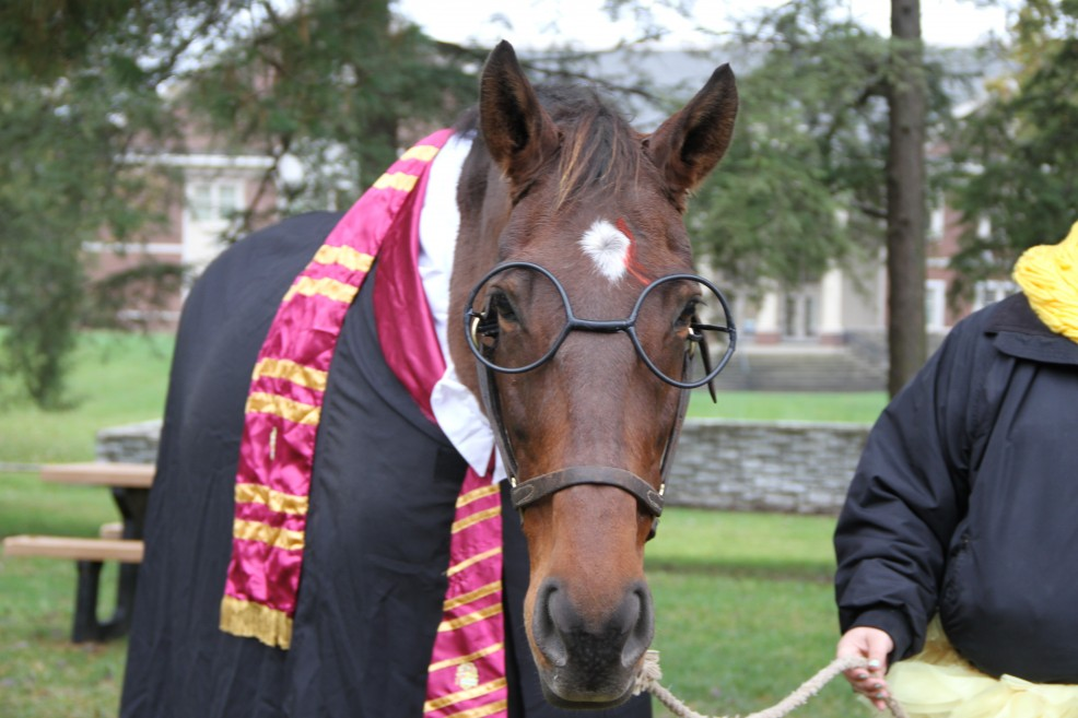 Harry Potter the Horse