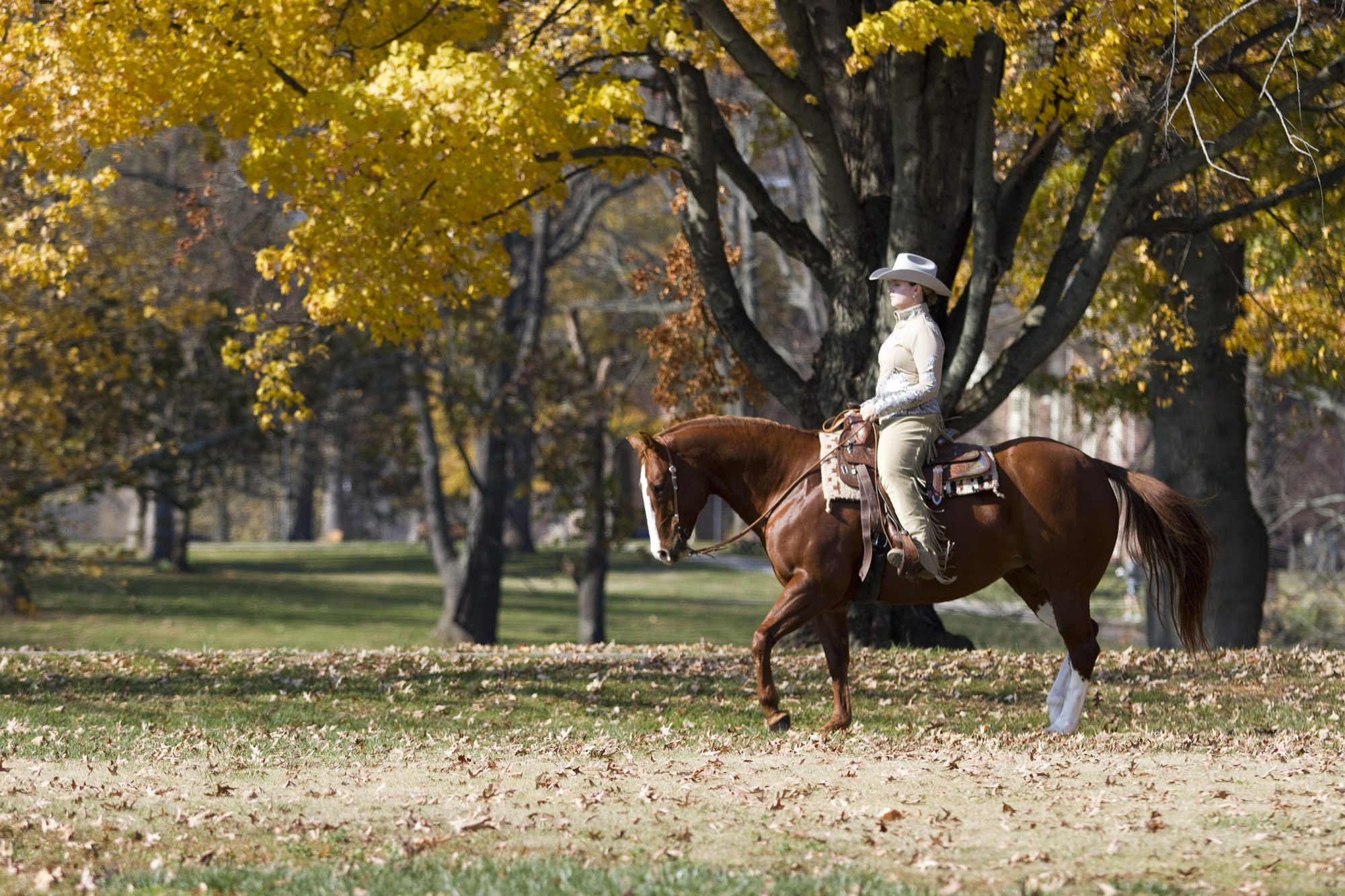Western rider in the center of campus.