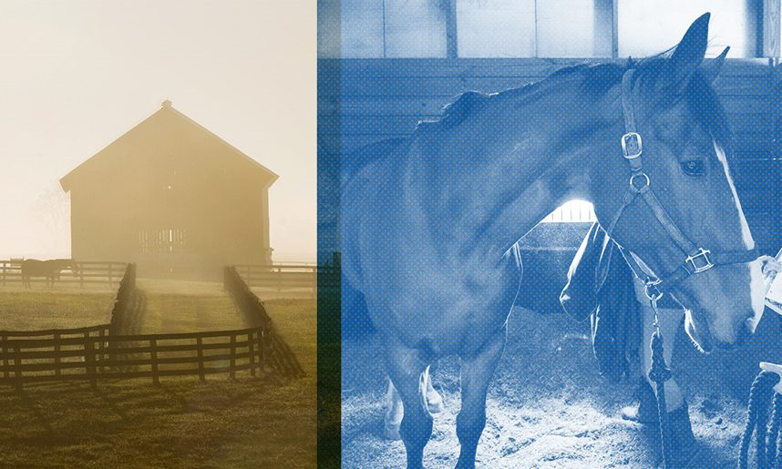 How to Compare Equine Colleges: A Guide for Students Interested in Working with Horses